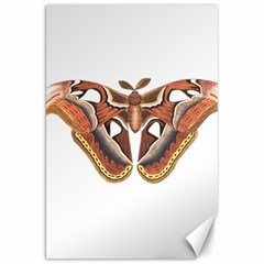 Butterfly Animal Insect Isolated Canvas 20  x 30