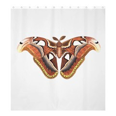 Butterfly Animal Insect Isolated Shower Curtain 66  x 72  (Large)