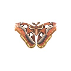 Butterfly Animal Insect Isolated Shower Curtain 48  x 72  (Small)