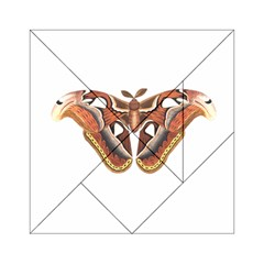 Butterfly Animal Insect Isolated Acrylic Tangram Puzzle (6  x 6 )