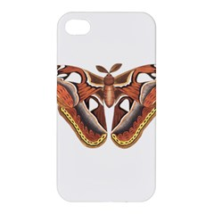 Butterfly Animal Insect Isolated Apple iPhone 4/4S Premium Hardshell Case
