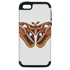 Butterfly Animal Insect Isolated Apple Iphone 5 Hardshell Case (pc+silicone)