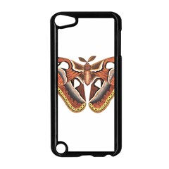 Butterfly Animal Insect Isolated Apple iPod Touch 5 Case (Black)