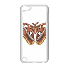 Butterfly Animal Insect Isolated Apple iPod Touch 5 Case (White)