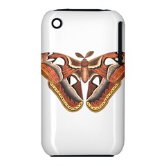 Butterfly Animal Insect Isolated iPhone 3S/3GS