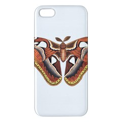 Butterfly Animal Insect Isolated Apple iPhone 5 Premium Hardshell Case