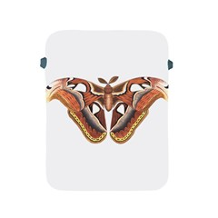 Butterfly Animal Insect Isolated Apple iPad 2/3/4 Protective Soft Cases