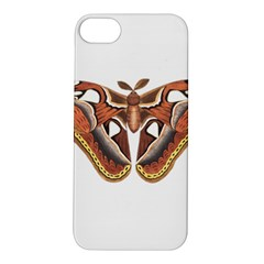 Butterfly Animal Insect Isolated Apple iPhone 5S/ SE Hardshell Case
