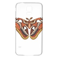 Butterfly Animal Insect Isolated Samsung Galaxy S5 Back Case (White)