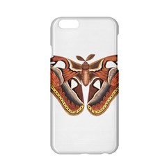 Butterfly Animal Insect Isolated Apple Iphone 6/6s Hardshell Case