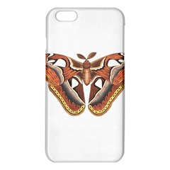 Butterfly Animal Insect Isolated Iphone 6 Plus/6s Plus Tpu Case