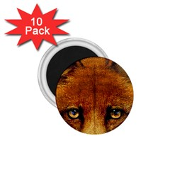 Fox 1.75  Magnets (10 pack)