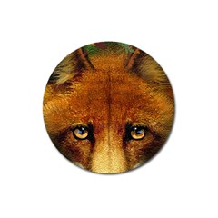Fox Magnet 3  (Round)