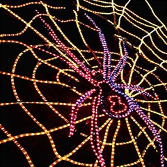 Black Widow Spider, Yellow Web Magic Photo Cubes