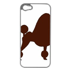 Poodle Brown Silo Apple iPhone 5 Case (Silver)