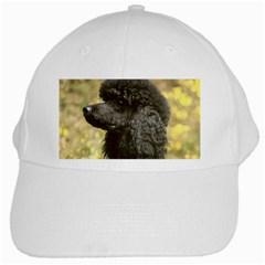 Poodle Love W Pic Black White Cap