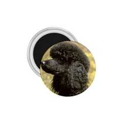 Poodle Love W Pic Black 1.75  Magnets