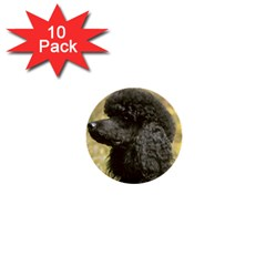 Poodle Love W Pic Black 1  Mini Buttons (10 pack)
