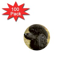 Poodle Love W Pic Black 1  Mini Buttons (100 pack)