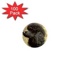 Poodle Love W Pic Black 1  Mini Magnets (100 pack)
