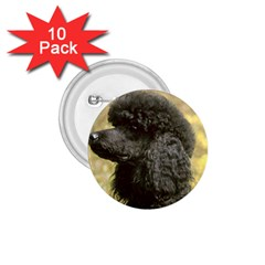 Poodle Love W Pic Black 1.75  Buttons (10 pack)