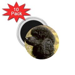 Poodle Love W Pic Black 1.75  Magnets (10 pack)