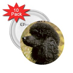 Poodle Love W Pic Black 2.25  Buttons (10 pack)