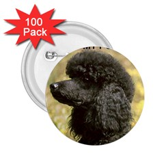 Poodle Love W Pic Black 2.25  Buttons (100 pack)