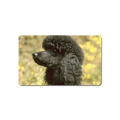 Poodle Love W Pic Black Magnet (Name Card)