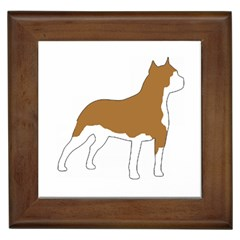 American Staffordshire Terrier  Silo Color Framed Tiles