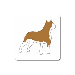 American Staffordshire Terrier  Silo Color Square Magnet