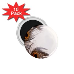 Peacock Feathery Background 1.75  Magnets (10 pack)