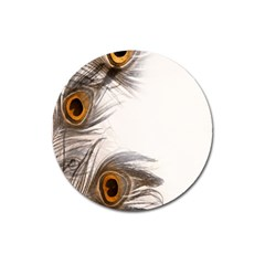 Peacock Feathery Background Magnet 3  (round)