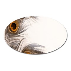 Peacock Feathery Background Oval Magnet