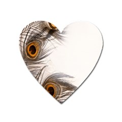 Peacock Feathery Background Heart Magnet