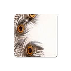 Peacock Feathery Background Square Magnet