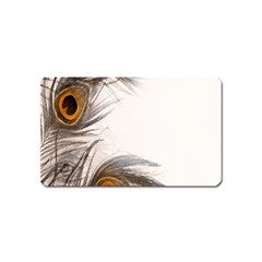Peacock Feathery Background Magnet (name Card)