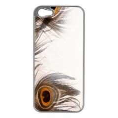 Peacock Feathery Background Apple iPhone 5 Case (Silver)