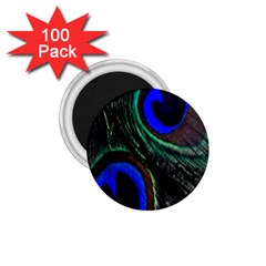Peacock Feather 1.75  Magnets (100 pack)