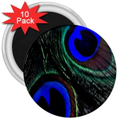 Peacock Feather 3  Magnets (10 Pack)