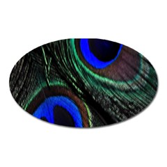 Peacock Feather Oval Magnet