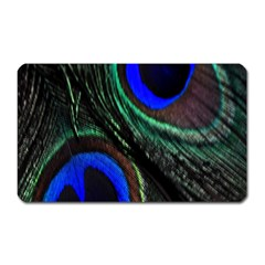 Peacock Feather Magnet (Rectangular)