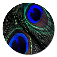 Peacock Feather Magnet 5  (round)