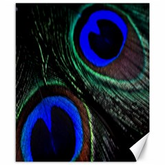 Peacock Feather Canvas 8  X 10