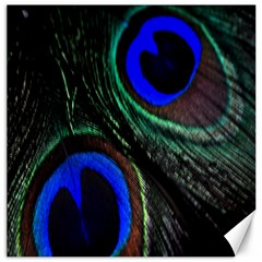 Peacock Feather Canvas 20  X 20