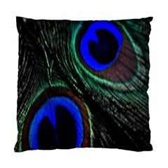 Peacock Feather Standard Cushion Case (one Side)
