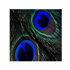 Peacock Feather Small Satin Scarf (Square)
