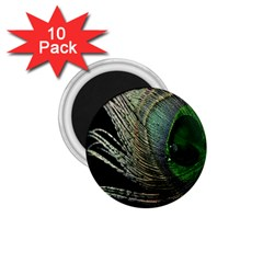 Feather Peacock Drops Green 1.75  Magnets (10 pack)