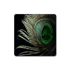 Feather Peacock Drops Green Square Magnet