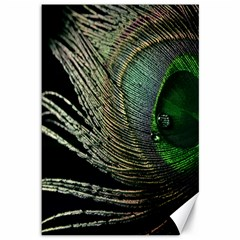 Feather Peacock Drops Green Canvas 12  X 18